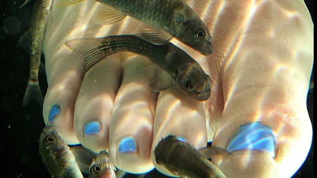 'Fish Pedicure' a Recipe for Bacterial Infection, Researchers Warn